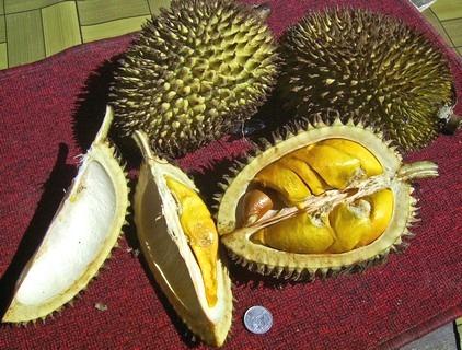 durián