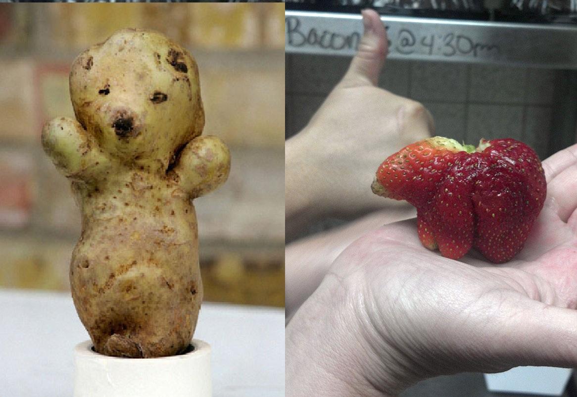 krumpli- és epermedve